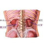 腰痛,肾区痛是怎么回事